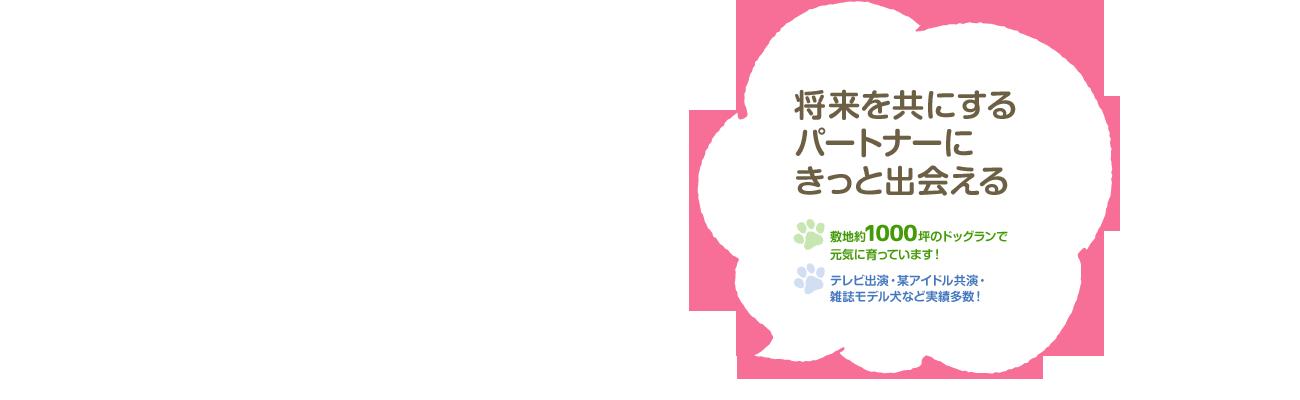 トイ・マイクロ・ティーカッププードル販売・千葉・東京|ワンズワールド冨里